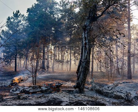 fire in the forest the trees are burning a lot of smoke