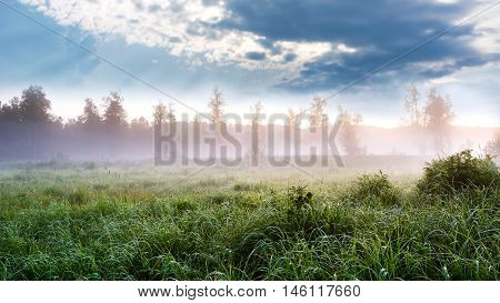 Beautiful landscape with dawn mist and morning dew. Summer idyllic beautiful landscape. Selective focus.