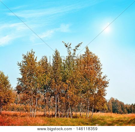 Autumn landscape. Beautiful leaves. Colorful trees. Indian summer