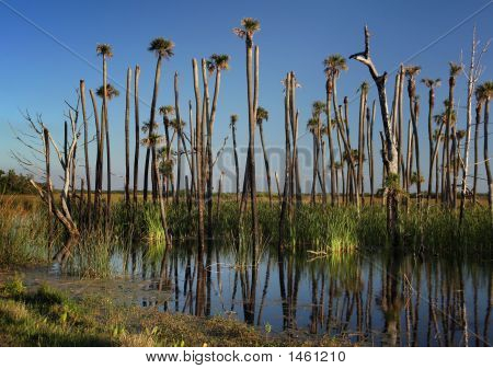 Palms In The Marsh