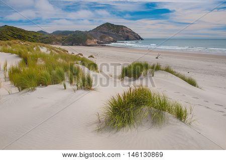 Dune Vegetation Wharariki Beach, South Island, New Zealand
