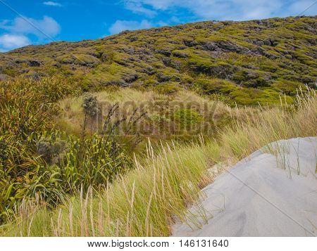 Various Types Of Dune Vegetation Wharariki Beach