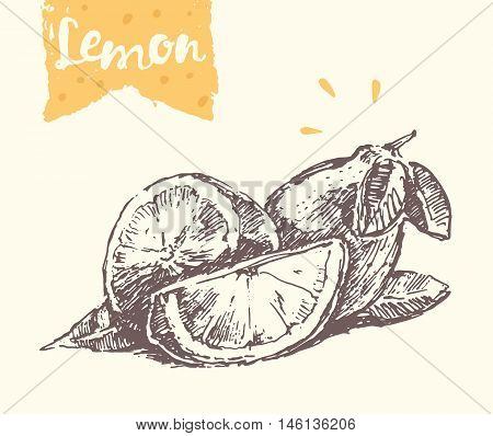 Hand drawn lemon, vector illustration, sketch draw