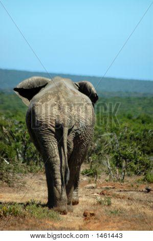 Elephant Fairwell
