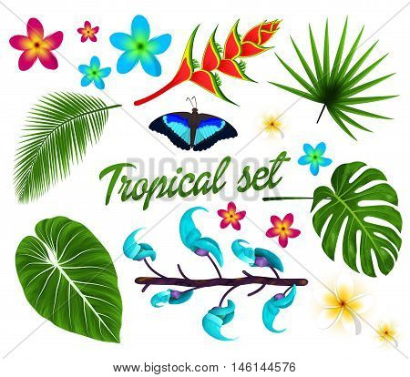 Vector tropical set jungle leaves set plumeria tropical flowers. Butterfly. isolated on white background. Vector illustration.