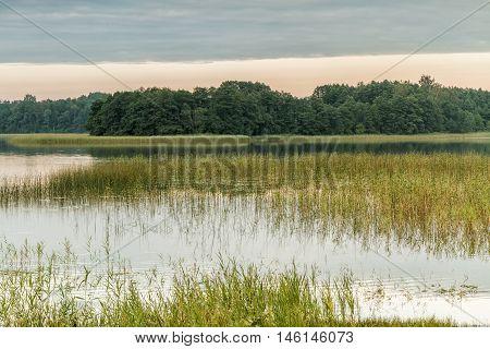 Reeds In Lake