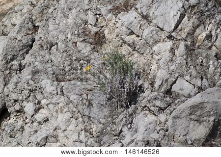 Dry Lava Basaltic Rock Stone Texture Background