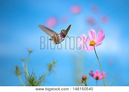 Hummingbird hover in mid-air in the garden over blue sky background