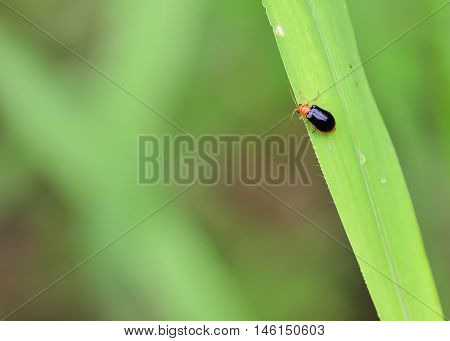 small insects with orange and black color perched on grass