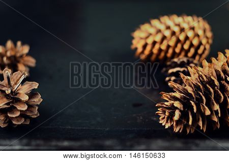 Pine And Spruce Cones On Dark Surface