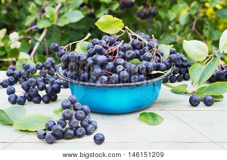 chokeberry in a metal bowl on the street