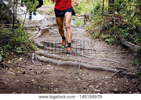 marathon runner running in woods trail earth and exposed tree roots