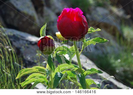 ışık, çiçek ve güneş doğadan manzaralar kırmızı ile yeşilin birleşimi