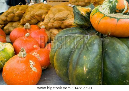 Multi Colored Pumpkins