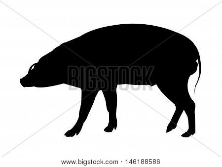Warthog Silhouette on White Background. Isolated vector illustration animal theme.