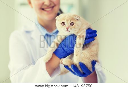 medicine, pet, animals, health care and people concept - close up of veterinarian doctor scottish fold kitten at vet clinic