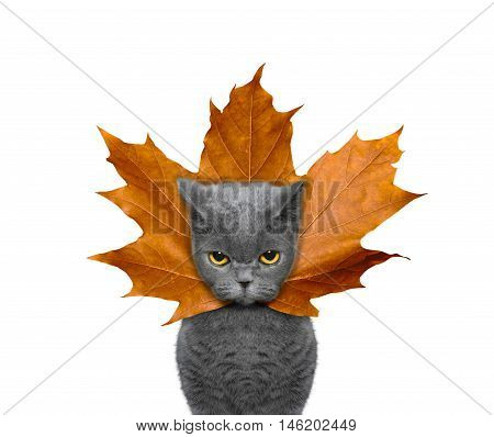 Cute cat with a leaf instead hat on the head -- isolated on white