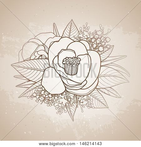Graphic floral card. Vector camellia leaves and flowers in cute vignette isolated on aged texture. Wedding style decorations in brawn colors. Coloring book page design for adults and kids