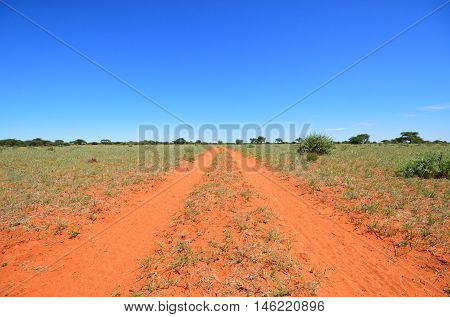 A red dirt track leads off to the horizon on a sunny day in the Southern Africa savanna