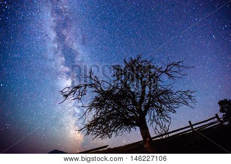 dry tree on a background of the sky with the Milky Way. Carpathians. Ukraine, Europe