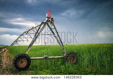 Sprinkler irrigation system in oilseed rape field on rainy day