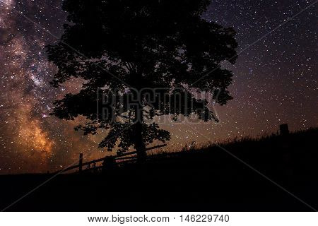 deep sky astrophoto. dry tree on a background of the sky with the Milky Way.