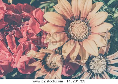 Yellow and red Flowers in matte film finish