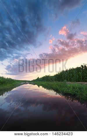 sunset in a field after a heavy rain / bright summer photo Ukraine