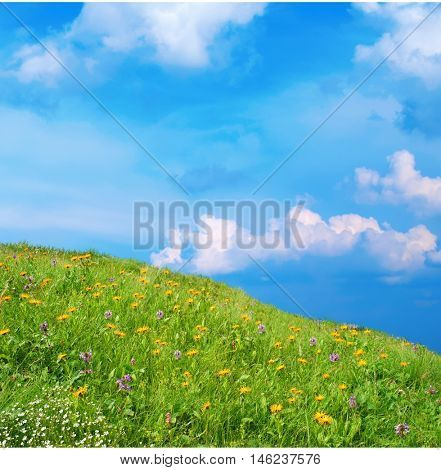meadow with wildflowers. slope covered with lush, green grass and wild flowers. yellow daisies and blue wild flowers in the grass. against the blue cloudy sky.