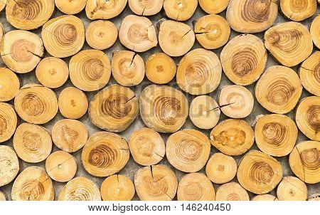 Wood background. Wood teak stump for background.