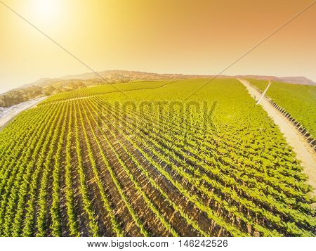 Spectacular aerial view at sunset of a vineyard in Napa Valley, San Francisco Bay Area in northern California.