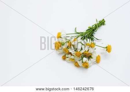 Bunch of white grass flowers on white background.