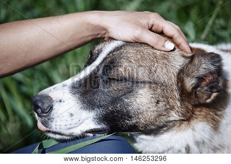 Hand of woman pampering her dog outdoors