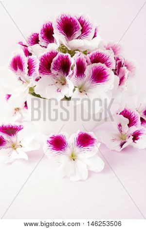 White and pink flower heads in a white porcelain cup on pastel violet background.