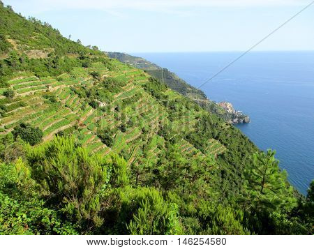 Top View Of The Gulf Of 5 Terre I