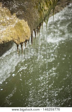 Water trickling down algae growing on the side of a waterfall.