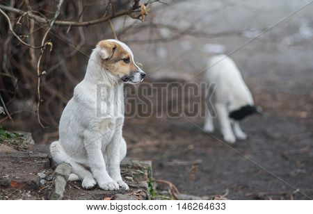Full body portrait of adorable mixed breed puppy thinking about future.