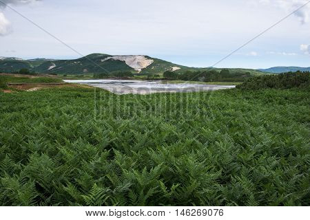 Green ferns around a lake in Uzon Caldera, Kamchatka, Russia