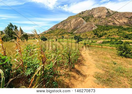 Field Of Corn In A Rocky Hill Landscape On A Sunny Day