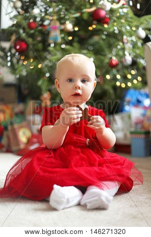A cute 12 month old baby girl in a red party dress is eating a gingerbread cookie in front of her family Christmas tree in her home.