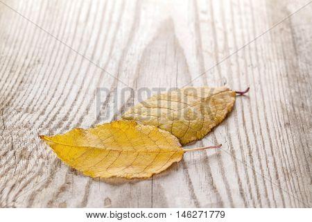 Beautiful fallen autumn leaves on wood background
