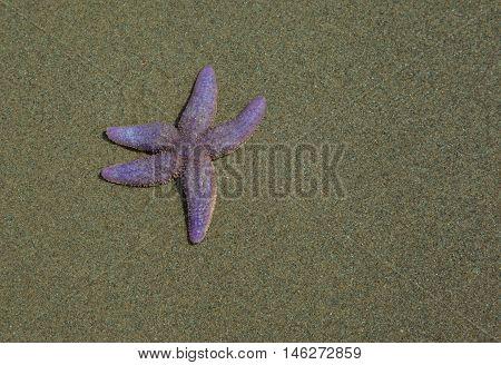 Starfish waving tentacle hello like isolated on beach