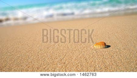 Tropical Beach Sea Shell