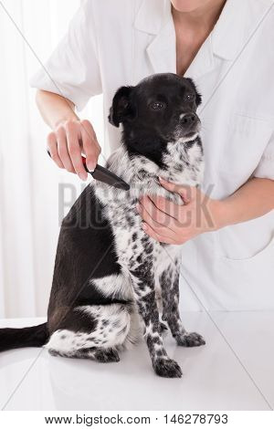 Close-up Of A Vet Combing Dog's Hair