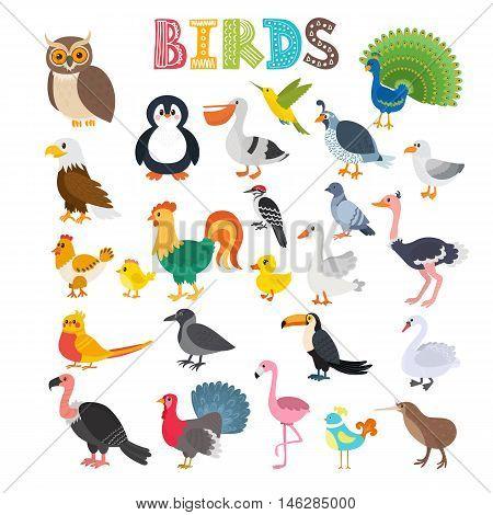 Vector Illustration Of Different Kind Of Birds. Cute Cartoon Birds