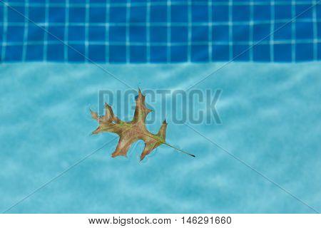 Oak Leaf Floating In Pool