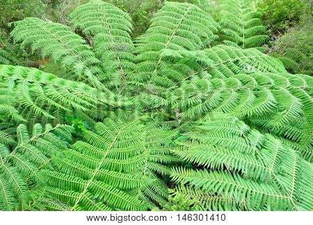 Tree Fern Canopy.  Abel Tasman National Park, New Zealand