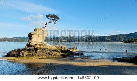 Surreal Tree and Rock Formation on Tropical Beach.  Tinline Bay, Abel Tasman National Park, New Zealand.
