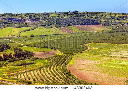 Crops, Wheat, Countryside Farmland Farms Agriculture Obidos Portugal.