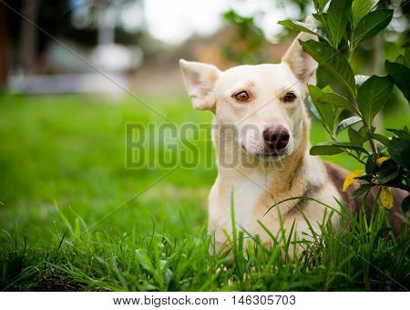 Funny dog with frightened face, surprise and suspicion on the grass